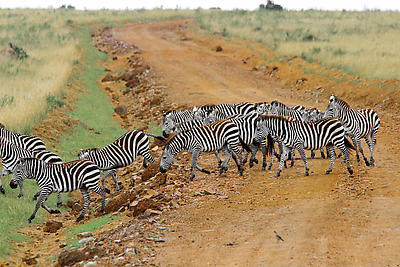 Zebra Crossing - Royalty free stock photo, image
