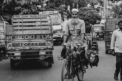 Man with hens on bicycle on Kolkata street - Royalty free stock photo, image