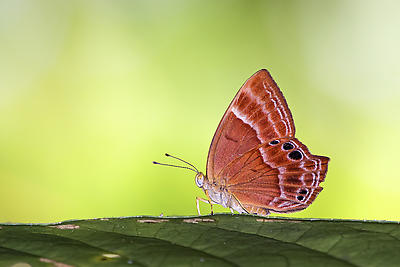 Butterfly 2 - Royalty free stock photo, image