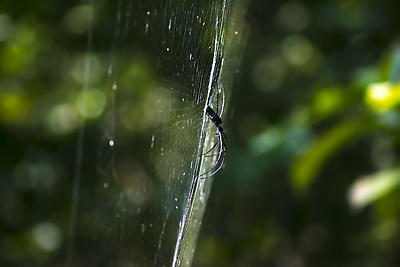 Queen of The Web  - Royalty free stock photo, image