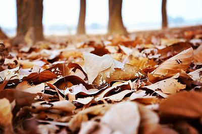Dry Leaves - Royalty free stock photo, image