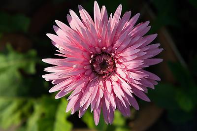 Beauty - Royalty free stock photo, image