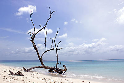 Driftwood in Beach - Royalty free stock photo, image