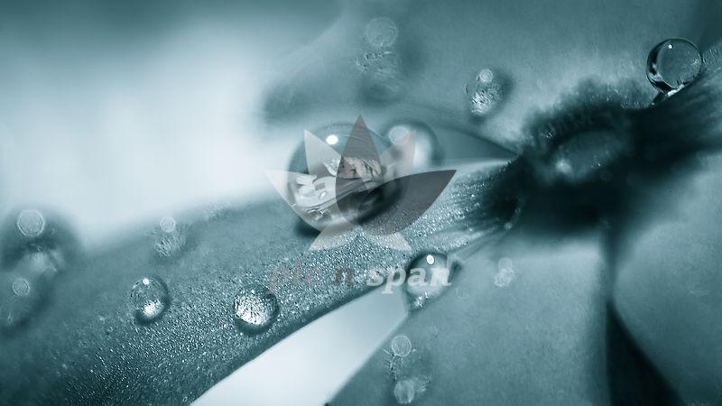 Drop on petal... Macro  - Royalty free stock photo, image