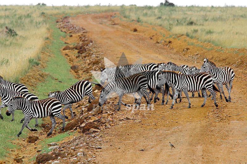 Zebra Crossing - Royalty free stock photo, image