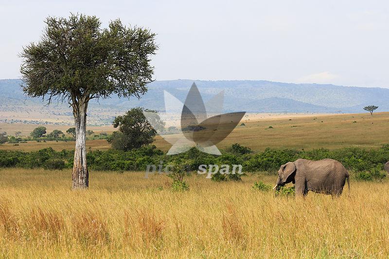 Elephantscape - Royalty free stock photo, image
