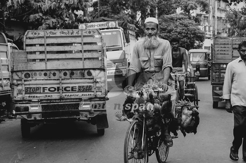 Man with hens on bicycle on Kolkata street - Royalty free stock photo, image
