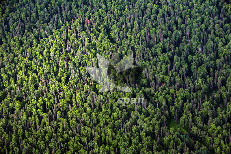 Green Earth - Royalty free stock photo, image