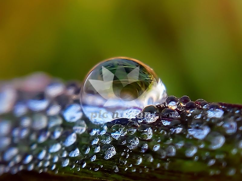 DEW DROPS - Royalty free stock photo, image