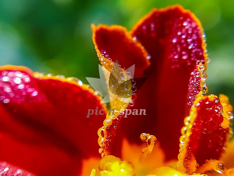 Dewdrops - Royalty free stock photo, image