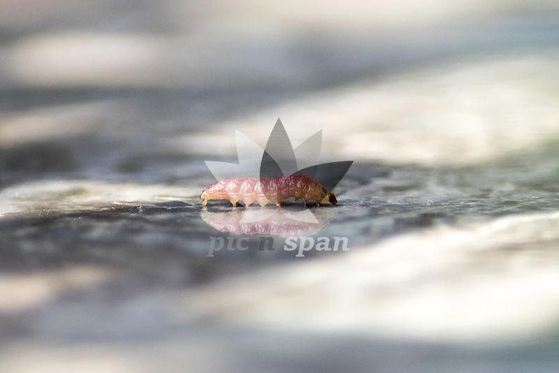 Pink Reflection  - Royalty free stock photo, image