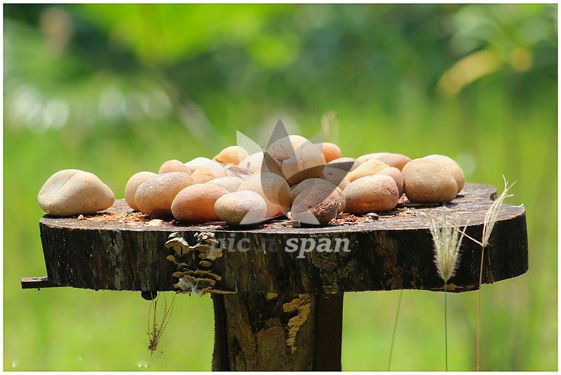 Mr Dileep - Royalty free stock photo, image
