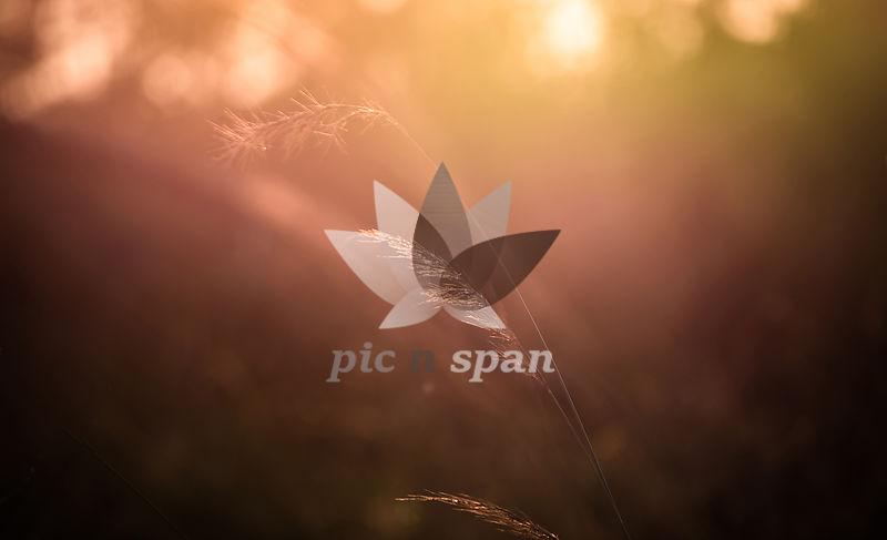 That Light - Royalty free stock photo, image