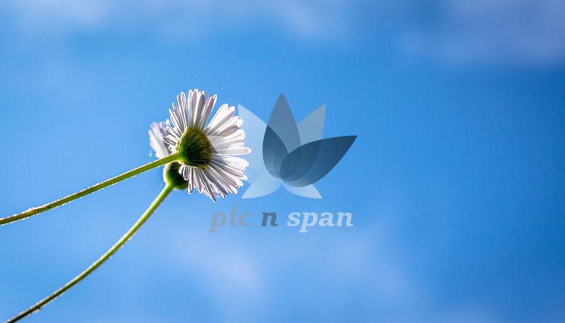 Flower - Royalty free stock photo, image