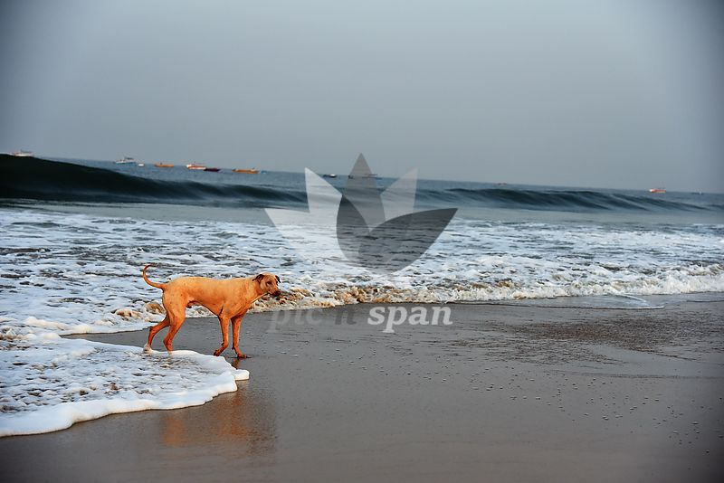 Morning Walk along the Beach - Royalty free stock photo, image