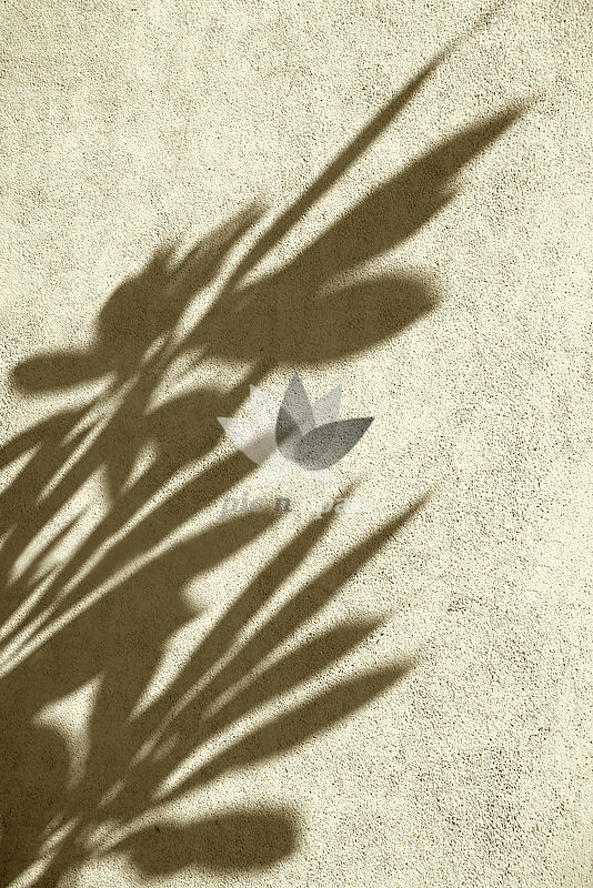 Shadow of leaves on textured wall - Royalty free stock photo, image