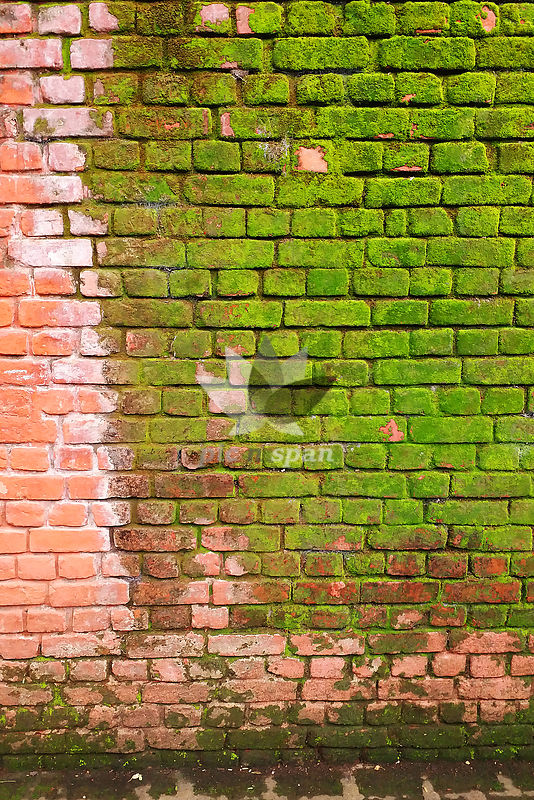 Red wall covered with green moss. Color contrast - Royalty free stock photo, image