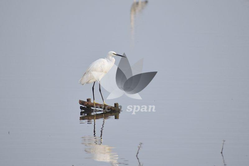 Single Bird - Royalty free stock photo, image