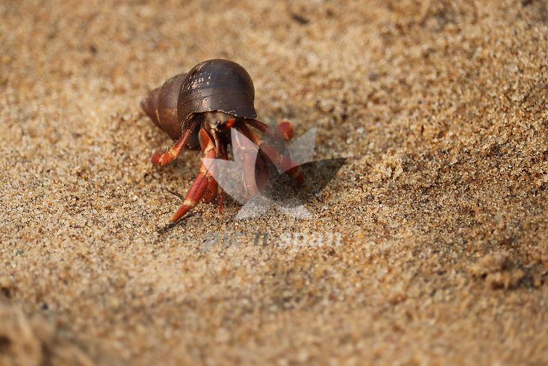 Sea beach lifeforms - Royalty free stock photo, image